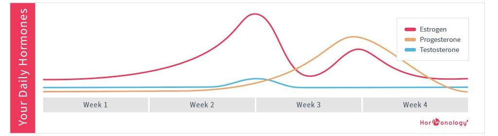 Female-Hormone-Cycle-Chart-Hormonology