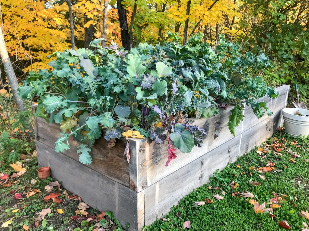 7 important lessons I learned from my first veggie garden in 2020. Tips for planting your first successful vegetable and herb garden.