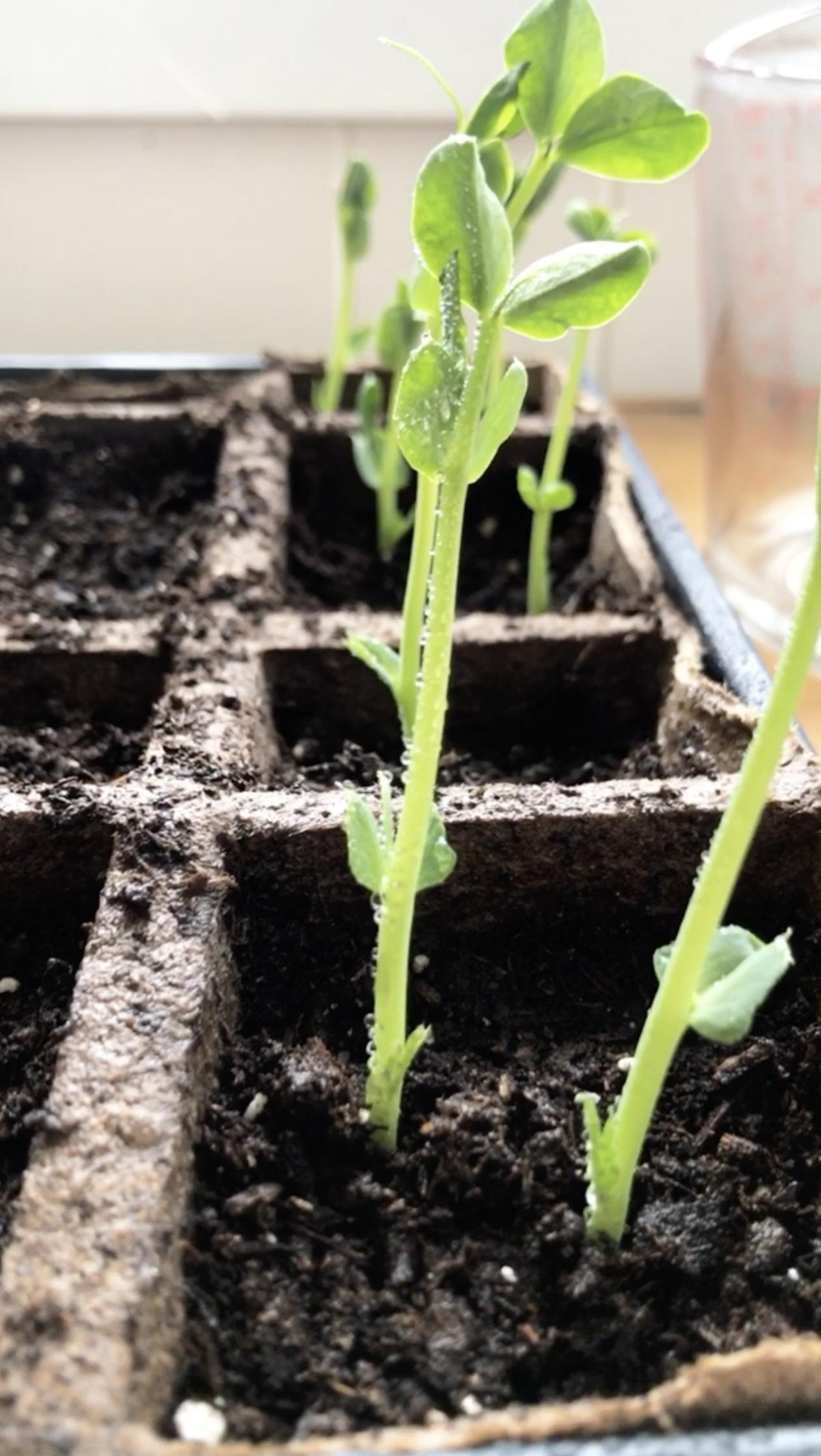 7 important lessons I learned from my first veggie garden in 2020. Tips for planting your first successful vegetable and herb garden. Everything you need to know before starting your first veggie garden - what NOT to do + tips and tricks I learned along the way!