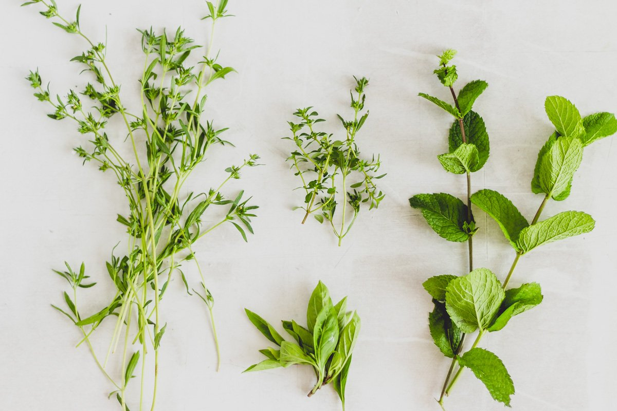 herbs including summer savoury, thyme, basil and peppermint on grey backdrop